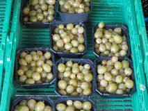 Gooseberry fruit food Stock Photos