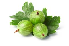 Gooseberry, among green leaves royalty free stock images