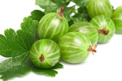 Gooseberry,  among green leaves Royalty Free Stock Photography