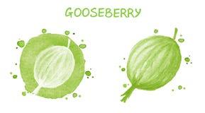 gooseberry Illustrazione dell'acquerello Fotografia Stock Libera da Diritti