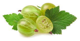 Gooseberry isolated in close up Royalty Free Stock Photos