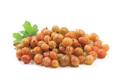 Gooseberry isolated  on white background - Image.  royalty free stock image