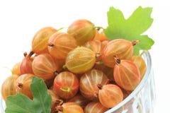 Gooseberry isolated  on white background - Image.  stock photos