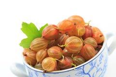 Gooseberry isolated  on white background - Image.  royalty free stock photo