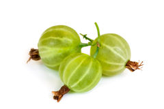 Gooseberry isolated on white background Royalty Free Stock Image