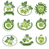 Gooseberry labels and elements set. Vector Royalty Free Stock Image