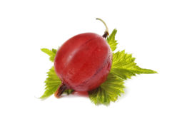Gooseberry on leaf Royalty Free Stock Photo