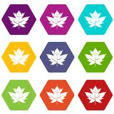 Gooseberry leaf icon set color hexahedron Royalty Free Stock Photos
