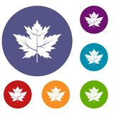 Gooseberry leaf icons set. In flat circle red, blue and green color for web Royalty Free Illustration