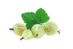 Gooseberry with leaf isolated Stock Images