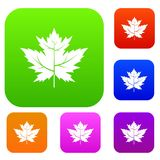 Gooseberry leaf set color collection Stock Image