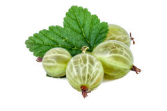Gooseberry with leaf on white Stock Image