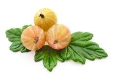 Gooseberry with leaves. Stock Photo