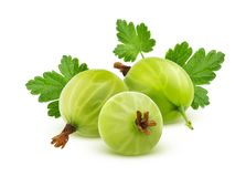 Green gooseberry with leaves isolated on white background. Gooseberry with leaves isolated on white background with clipping path stock images