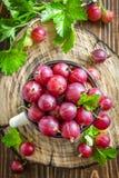 Gooseberry Stock Image