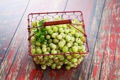Gooseberry Stock Photos