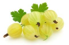 Gooseberry maduro foto de stock