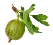 Gooseberry maduro fotos de stock