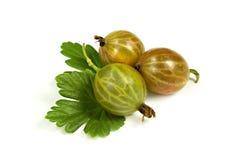 Gooseberry maduro com folhas Imagem de Stock Royalty Free