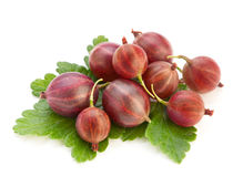 Gooseberry maduro vermelho fotografia de stock royalty free