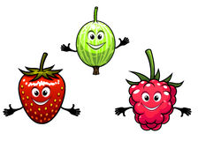 Gooseberry, raspberry and strawberry berries Stock Images