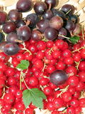 Gooseberry and red currant Royalty Free Stock Image