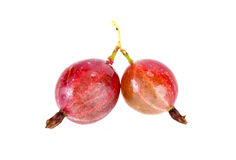 Gooseberry. Ripe berry of gooseberry it is isolated on a white background royalty free stock photo
