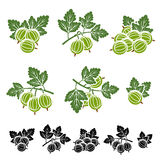 Gooseberry set. Vactor Stock Images