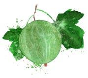 Gooseberry vector logo design template. Berry or Stock Photography