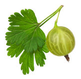Gooseberry verde foto de stock royalty free