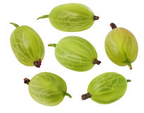 Gooseberry verde foto de stock royalty free