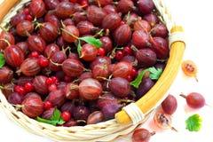 Gooseberry vermelho e uma passa de Corinto vermelha fotos de stock royalty free