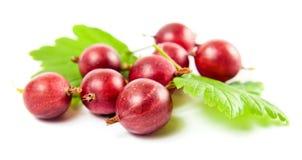 Gooseberry vermelho em um fundo branco Fotos de Stock Royalty Free