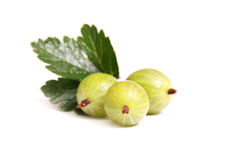 Gooseberry on a white background Royalty Free Stock Images