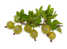 Gooseberry  on white background Royalty Free Stock Photography
