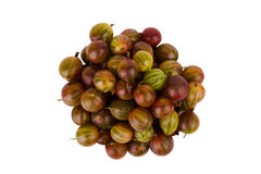 Gooseberry on a white background Stock Photos