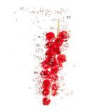 gooseberrys пука брызгают воду Стоковые Фотографии RF