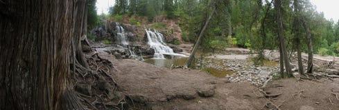 Gooseberry Falls Cedars Stock Photography