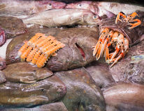Goosefish and other seafood on market counter. Raw Goosefish and other seafood on market counter stock images