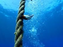 Gooseneck λαβίδα Florida Keys Στοκ εικόνα με δικαίωμα ελεύθερης χρήσης
