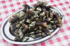 Gooseneck barnacles Royalty Free Stock Image