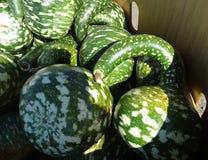 Gooseneck gourd, swan gourd, Lagenaria siceraria, Stock Images