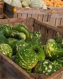 Gooseneck Gourds Stock Photos
