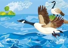 Gooses en la laca Imagenes de archivo
