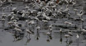 Gooses entspannen sich Lizenzfreie Stockbilder