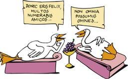 Gooses latini Fotografia Stock