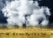 Gooses swimming on golden pond Stock Photos