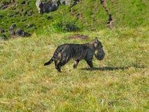 Gopher, gemalen eekhoorn royalty-vrije stock fotografie