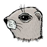 Gopher royalty free illustration