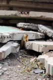 Gopher. The photo of a small ground squirrel sitting among the ruins of the house Stock Photos